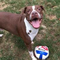 Adopt A Pet :: Toby - Chambersburg, PA