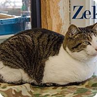 Adopt A Pet :: Zeke - Hamilton, MT