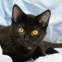 Adopt A Pet :: Colin - Crossfield, AB