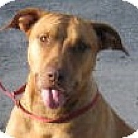 Adopt A Pet :: Ruby - Orange Lake, FL
