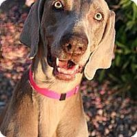 Adopt A Pet :: KATE - Albuquerque, NM