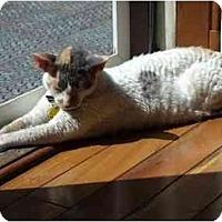 Adopt A Pet :: Roxie - Riverside, RI