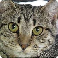 Adopt A Pet :: Tink - Port Republic, MD