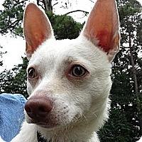 Adopt A Pet :: *Pablo - Winder, GA