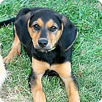 Adopt A Pet :: Lola - Council Bluffs, IA