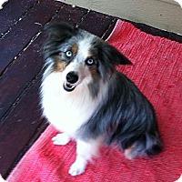 Adopt A Pet :: Dandy - Columbia, SC