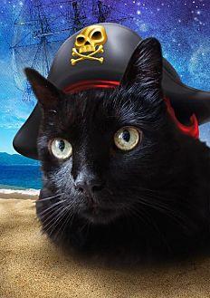 Domestic Shorthair Cat for adoption in Cincinnati, Ohio - zz 'Quincy' courtesy post