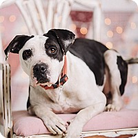 Adopt A Pet :: Cookie - Portland, OR
