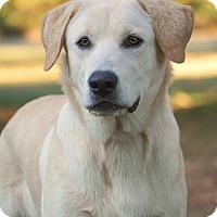Adopt A Pet :: *Drake - PENDING - Westport, CT