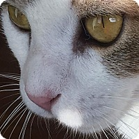 Adopt A Pet :: Roxy & Rayna - Horsham, PA
