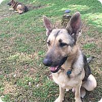 Adopt A Pet :: Bryson - Houston, TX