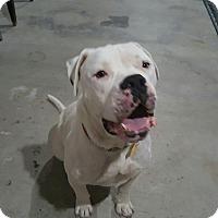 Adopt A Pet :: Zeek - Homestead, FL