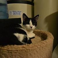 Adopt A Pet :: Taylor - Land O Lakes, FL