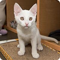Adopt A Pet :: Vaughn - Wilmington, DE