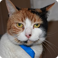 Adopt A Pet :: LILLY - Clayton, NJ