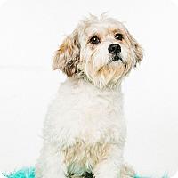 Adopt A Pet :: Jackson - Fort Atkinson, WI