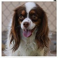 Adopt A Pet :: Duke - Capistrano Beach, CA