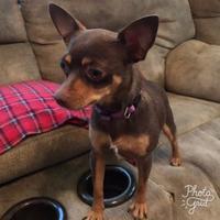 Adopt A Pet :: Jolie - Kenedy, TX