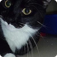 Adopt A Pet :: Cassidy - Hamburg, NY