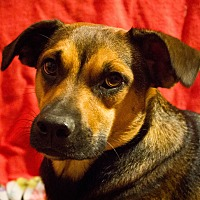 Adopt A Pet :: Dani - Bowie, MD