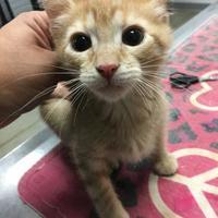 Adopt A Pet :: Cheeto - Fort Dodge, IA