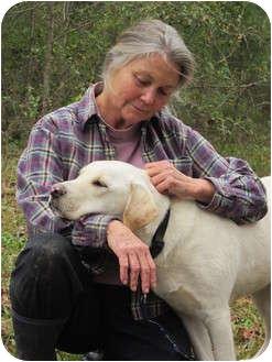 Labrador Retriever Mix Dog for adoption in Wilmington, Delaware - Romeo