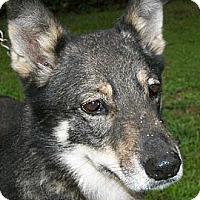 Adopt A Pet :: Laika - Mtn Grove, MO