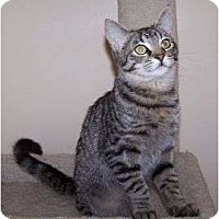 Adopt A Pet :: K-Melody4-Erol - Colorado Springs, CO
