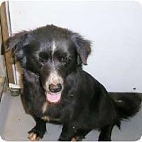 Adopt A Pet :: Tucker - Alexandria, VA
