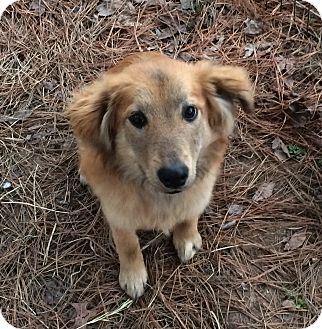 Golden Retriever Mix Dog for adoption in East Hartford, Connecticut - Twilah-pending adoption
