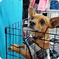 Adopt A Pet :: Yogi - Rosamond, CA