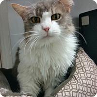 Adopt A Pet :: Rosie Odelia - Diamond Springs, CA