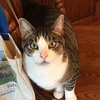 Adopt A Pet :: Jerry - Vineland, NJ