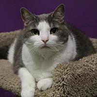 Adopt A Pet :: Gracie - Herndon, VA