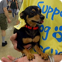 Adopt A Pet :: Snickers - Beavercreek, OH