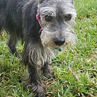 Adopt A Pet :: Ninny - Houston, TX