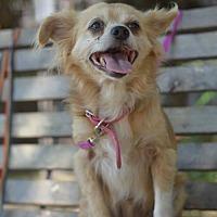 Adopt A Pet :: Sally - Vacaville, CA