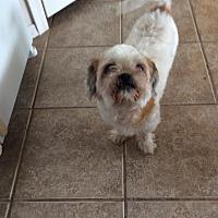 Adopt A Pet :: Moonshine - San Antonio, TX
