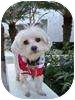 Maltese Dog for adoption in Los Angeles, California - LUCA