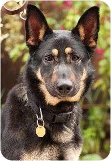 German Shepherd Dog Mix Dog for adoption in Cupertino, California - Akiha