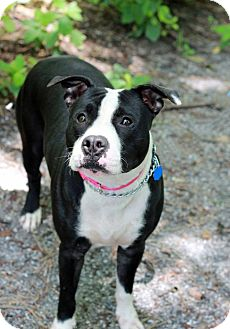 Terrier (Unknown Type, Medium) Mix Dog for adoption in Tinton Falls, New Jersey - Anya