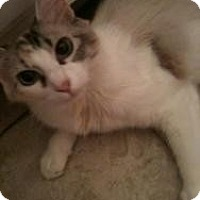 Adopt A Pet :: KeeKee - justin, TX