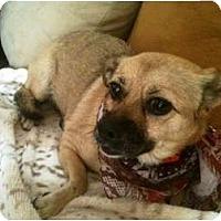 Adopt A Pet :: Penny - Rancho Mirage, CA