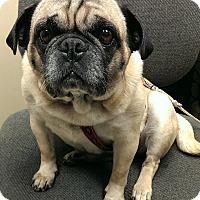 Adopt A Pet :: Queenie - Hinckley, MN