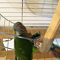 Adopt A Pet :: Jazzy - Punta Gorda, FL