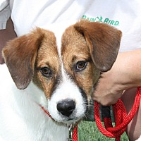 Adopt A Pet :: Zack - in Maine - kennebunkport, ME