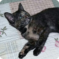 Adopt A Pet :: Susie - Harrisburg, NC