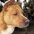 Adopt A Pet :: Kathy
