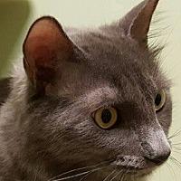 Adopt A Pet :: Meri - Auburn, CA