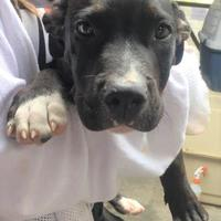 Terrier (Unknown Type, Small) Mix Dog for adoption in St. Thomas, Virgin Islands - MAXI